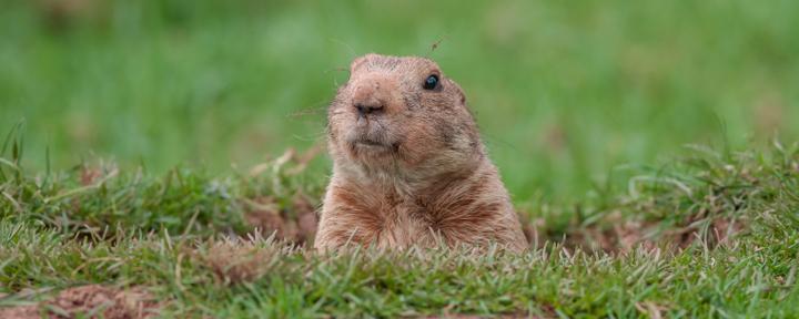 FS-groundhog